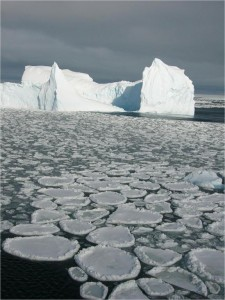 Pancake ice forms when waves are present as the ocean surface begins to freeze. Photo courtesy of Vicky Lytle.