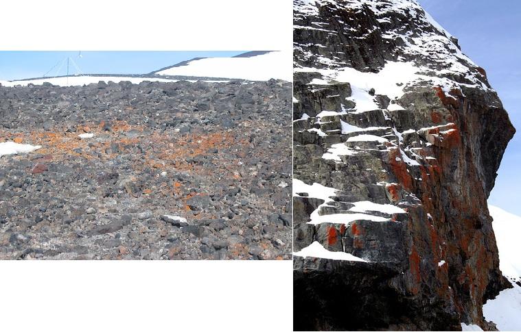 Plants of the Arctic and Antarctic — Polar Plants — Beyond