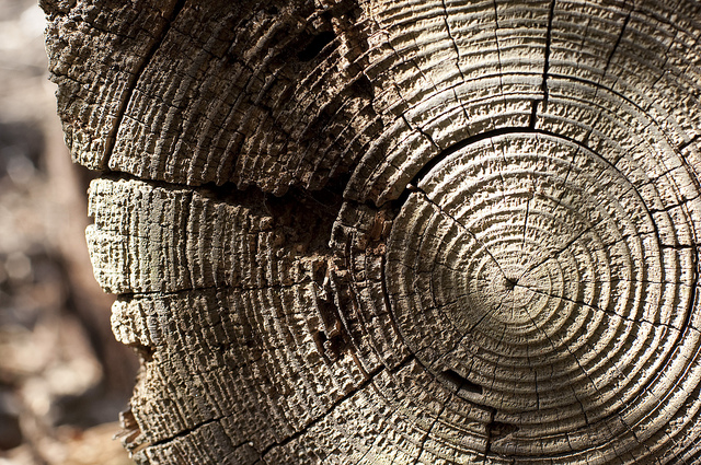Activities For Studying Tree Rings Online Beyond Weather